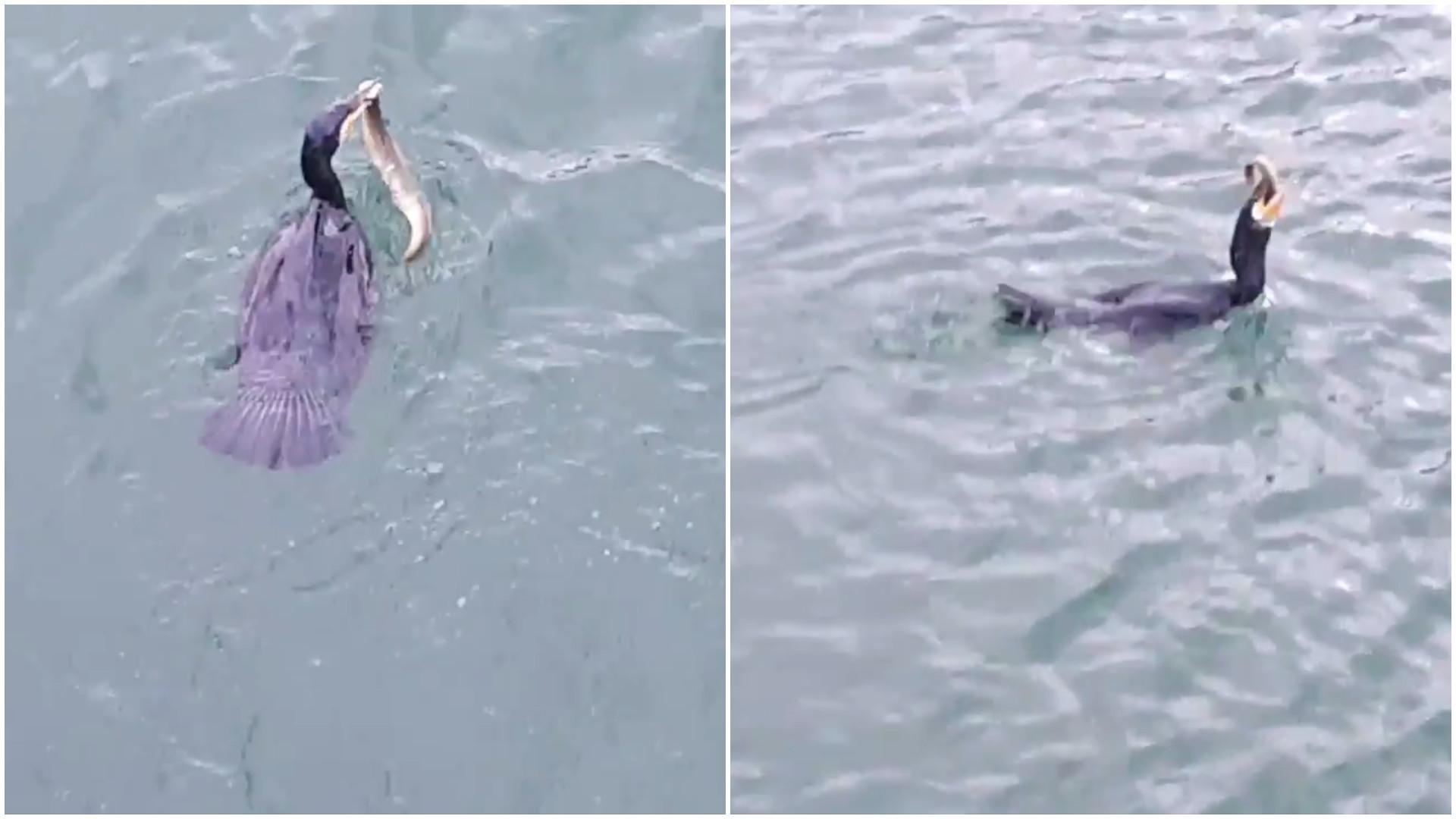 Ave engole enguia inteira durante batalha na água; assista!