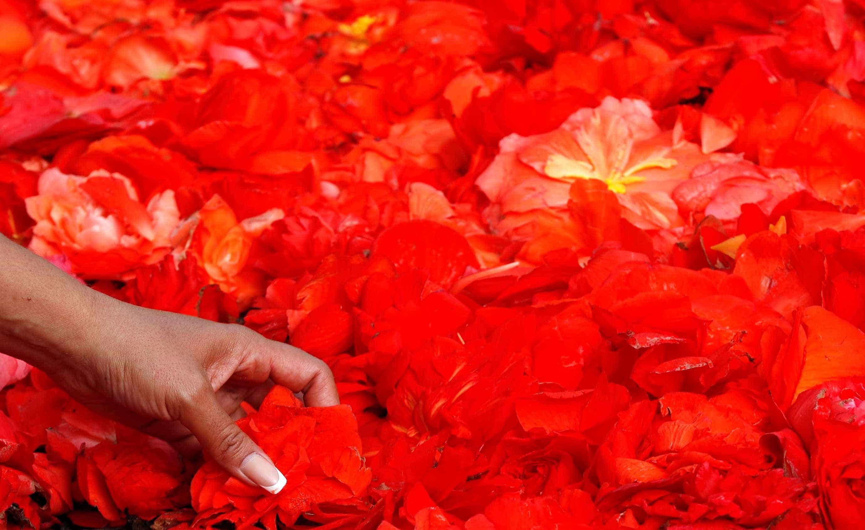 Feito com flores, tapete de 1.800 m² é exposto em Bruxelas; amplie