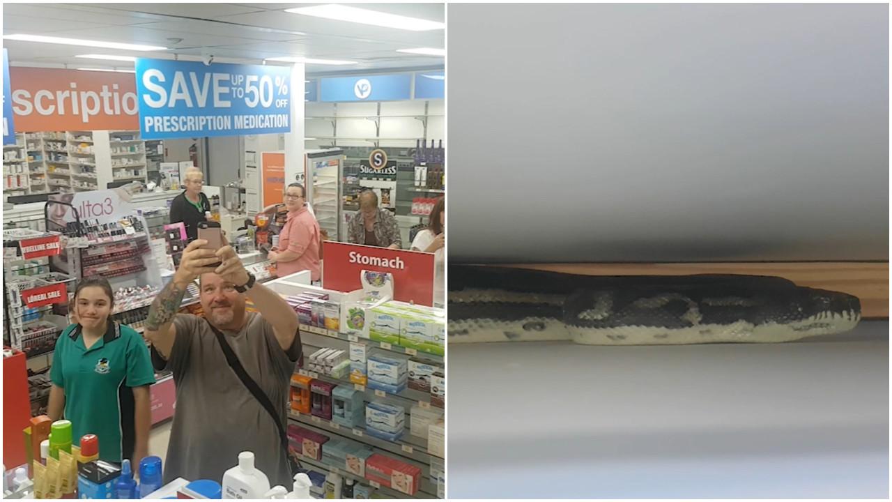 Cobra gigante é encontrada em prateleira de farmácia na Austrália