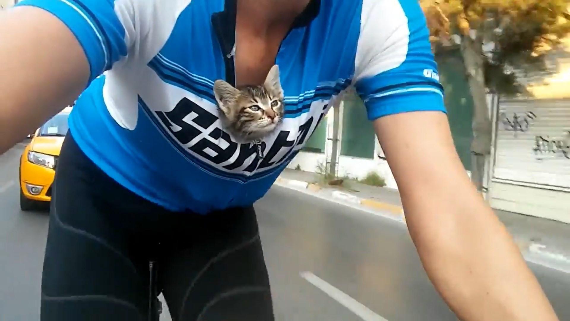 Ciclista transporta gato abandonado por 30km