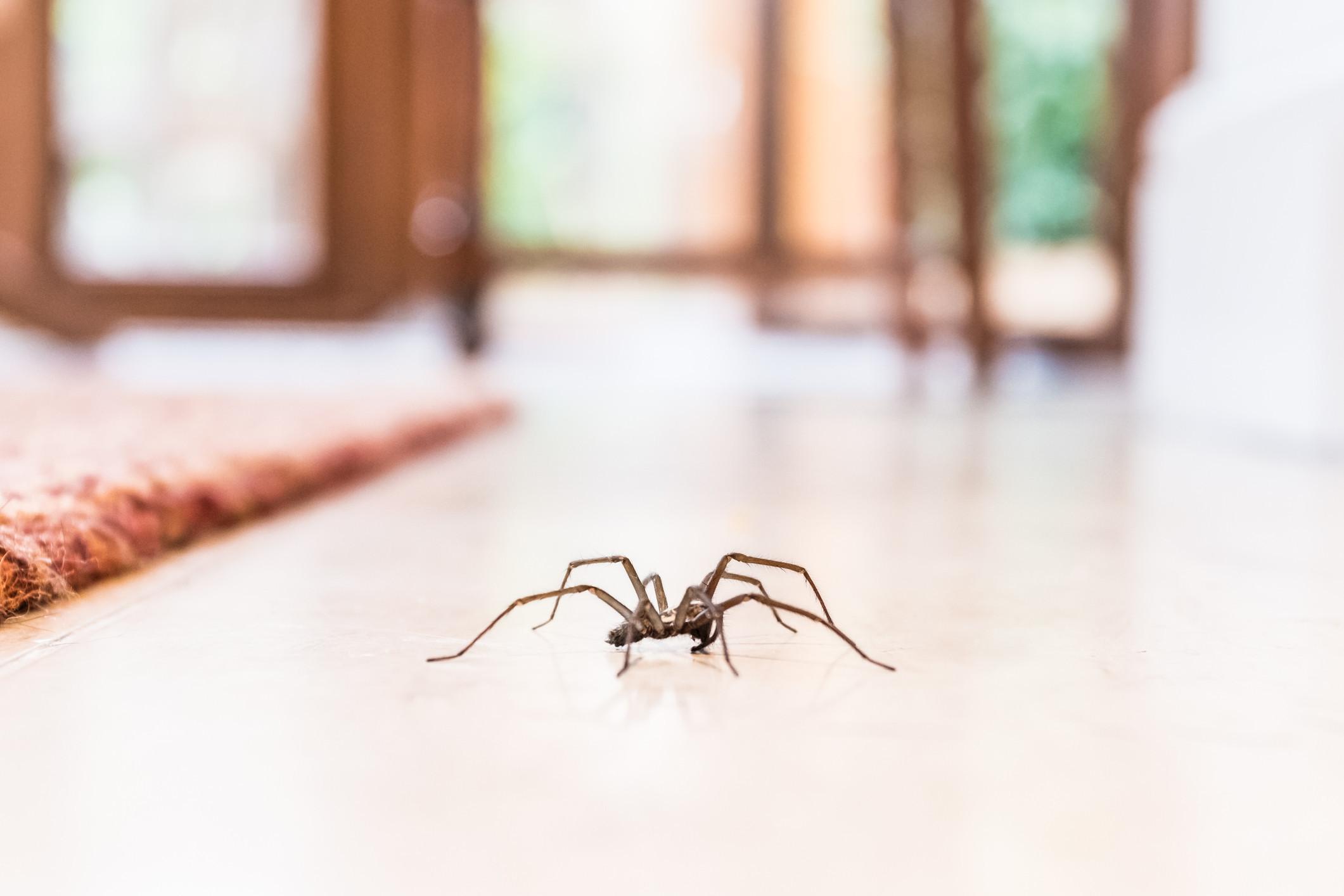 Fobias: os famosos que admitiram ter medos irracionais