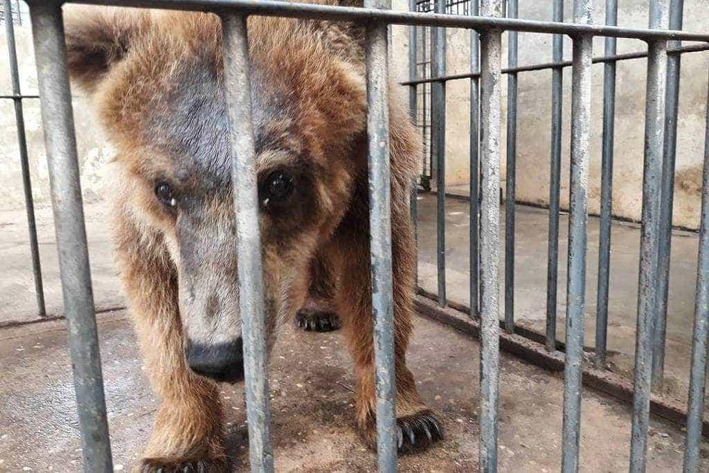 Juiz aprova transferência da 'ursa mais triste do mundo'