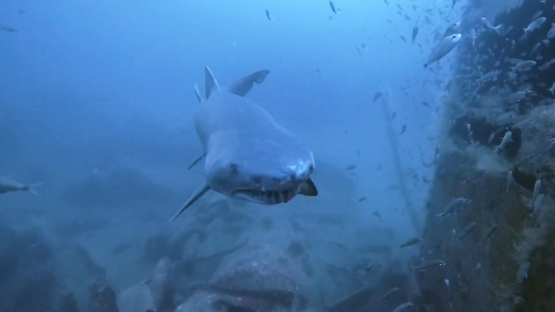 Mergulhadora é surpreendida por tubarão na costa da Carolina do Norte