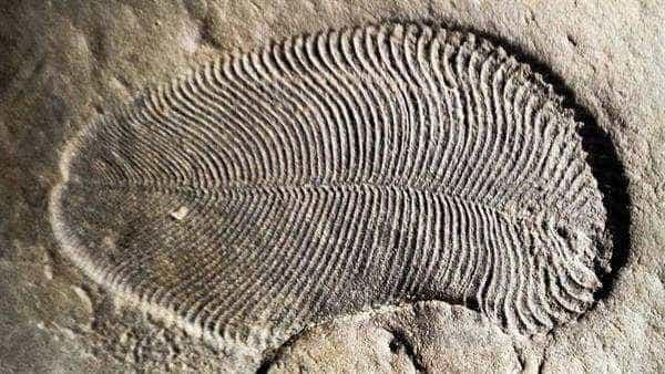 Fóssil de animal mais antigo é encontrado na Austrália