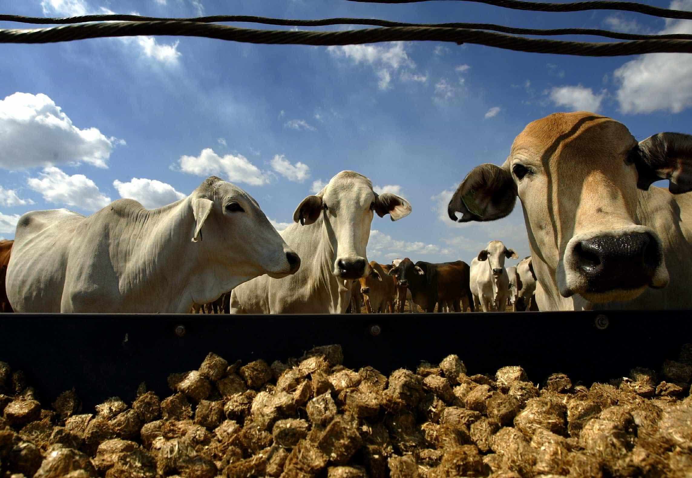 Vídeo: boiada foge de fazenda e assusta moradores no DF