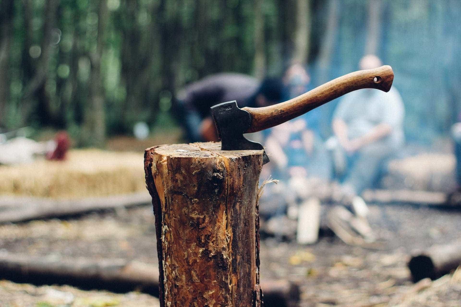 367 árvores são cortadas para construção de piscinão na zona sul de SP