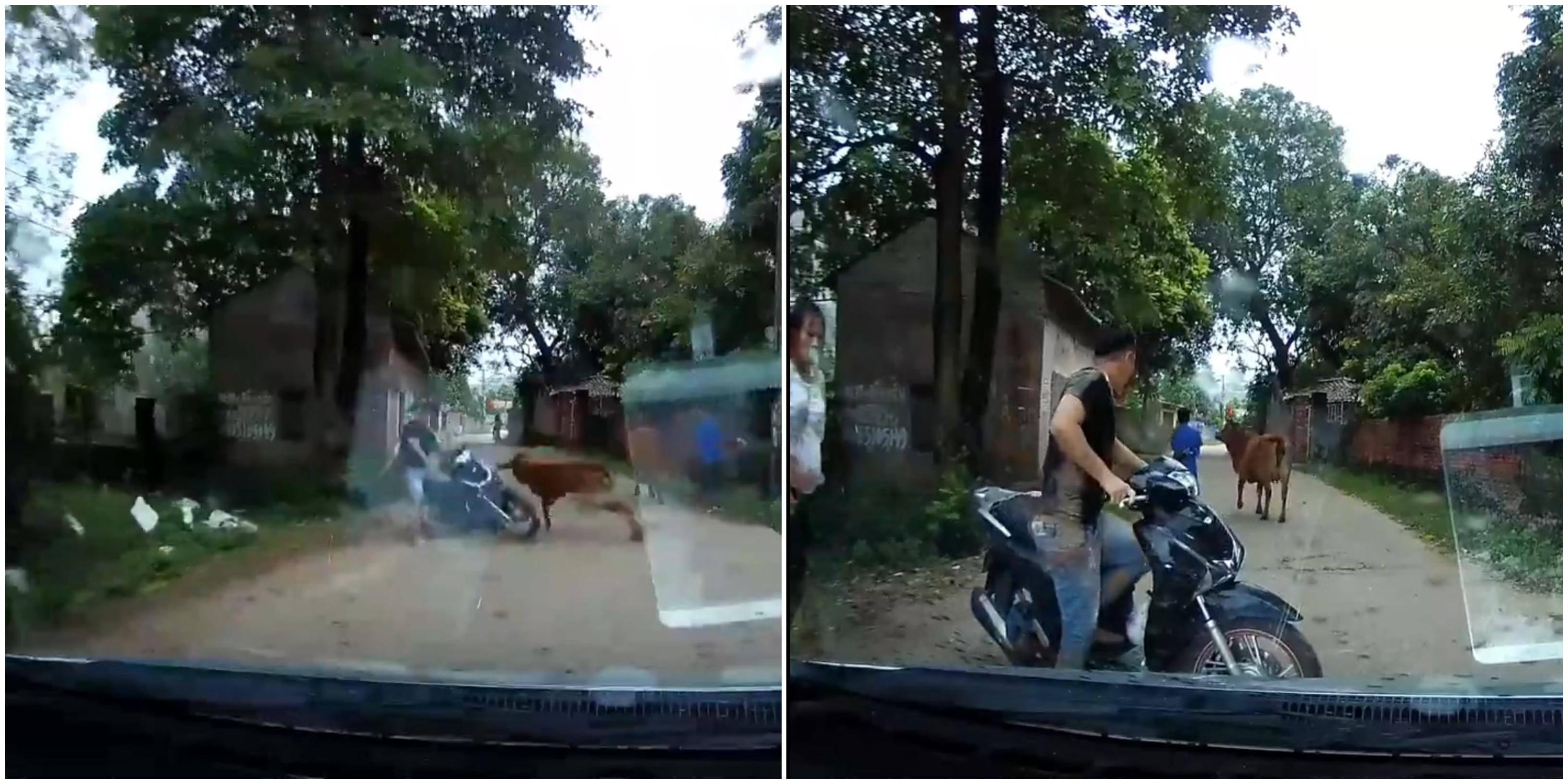 Casal de moto é arremessado por uma vaca no Vietnã