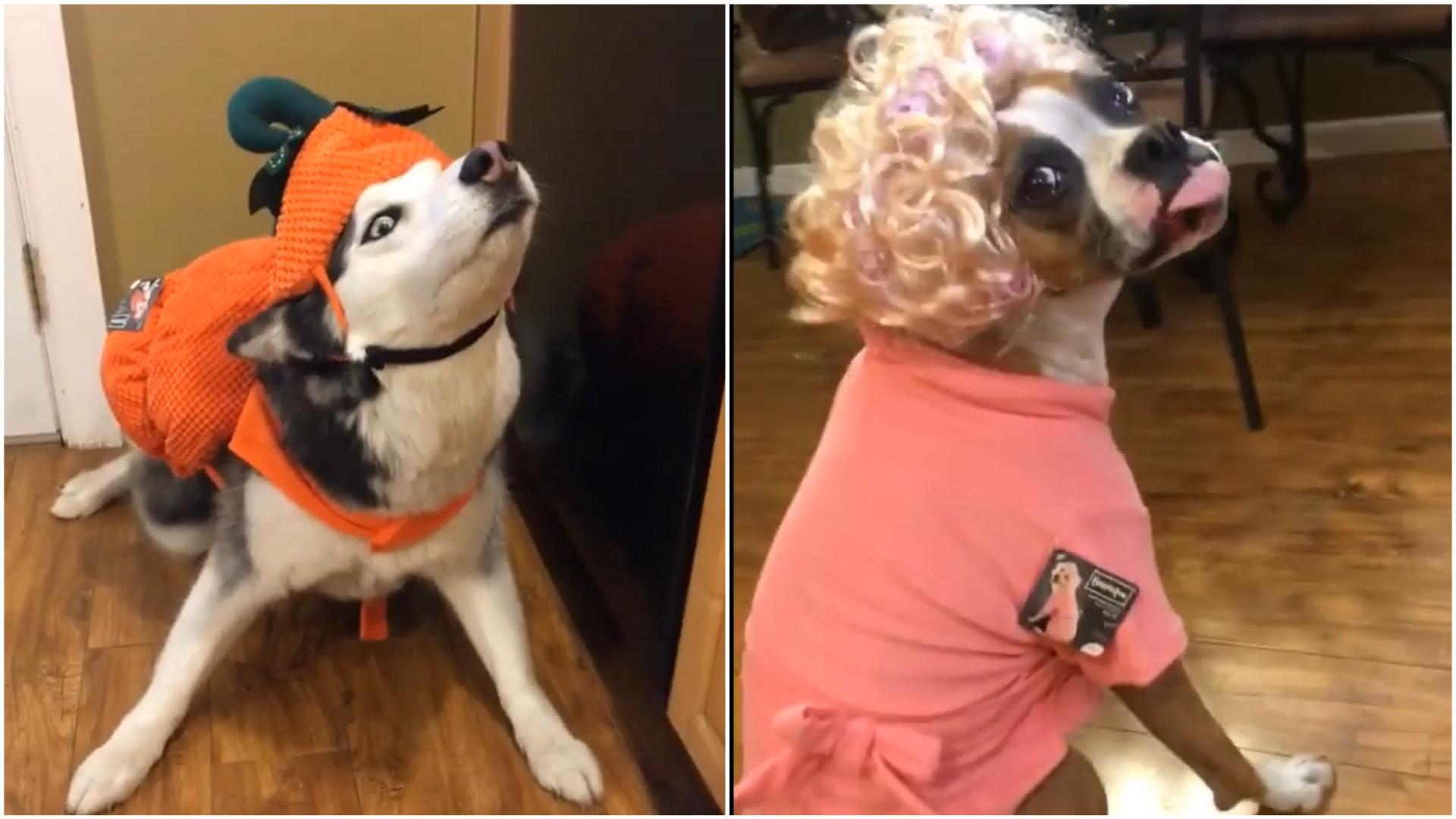 Estes cachorros estão prontos para o Halloween