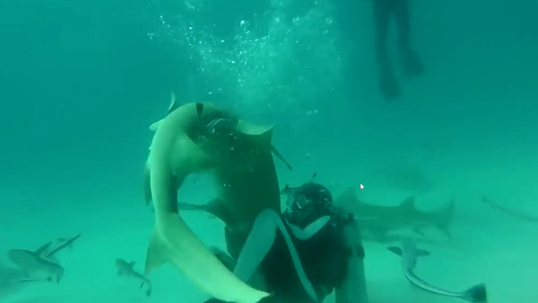 Mergulhadores salvam tubarão preso em anzol nas Bahamas