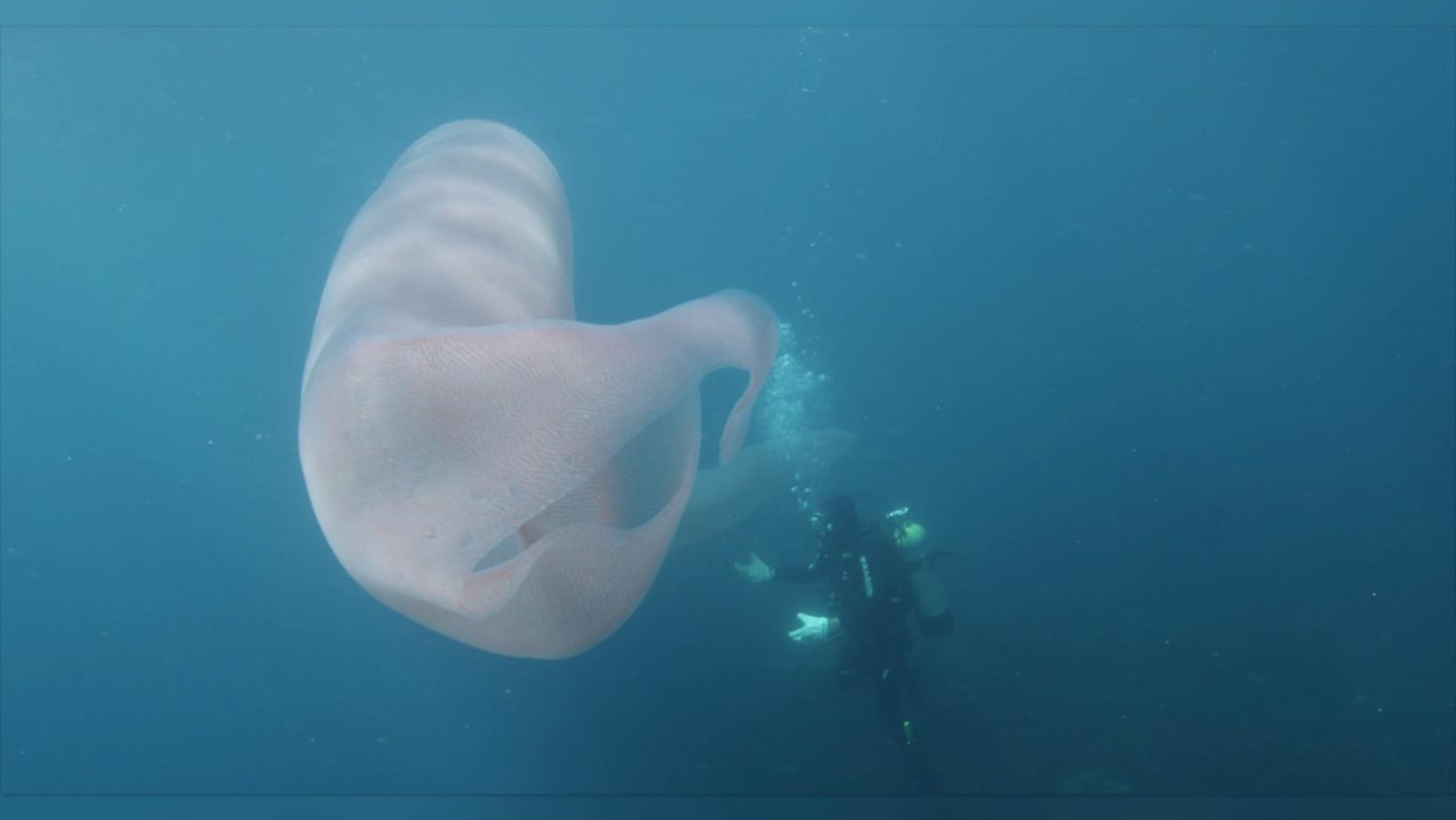 Mergulhadores encontram verme com mais de 8 metros
