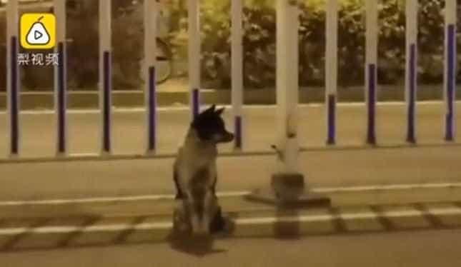 Cão espera quase três meses em estrada onde a dona morreu