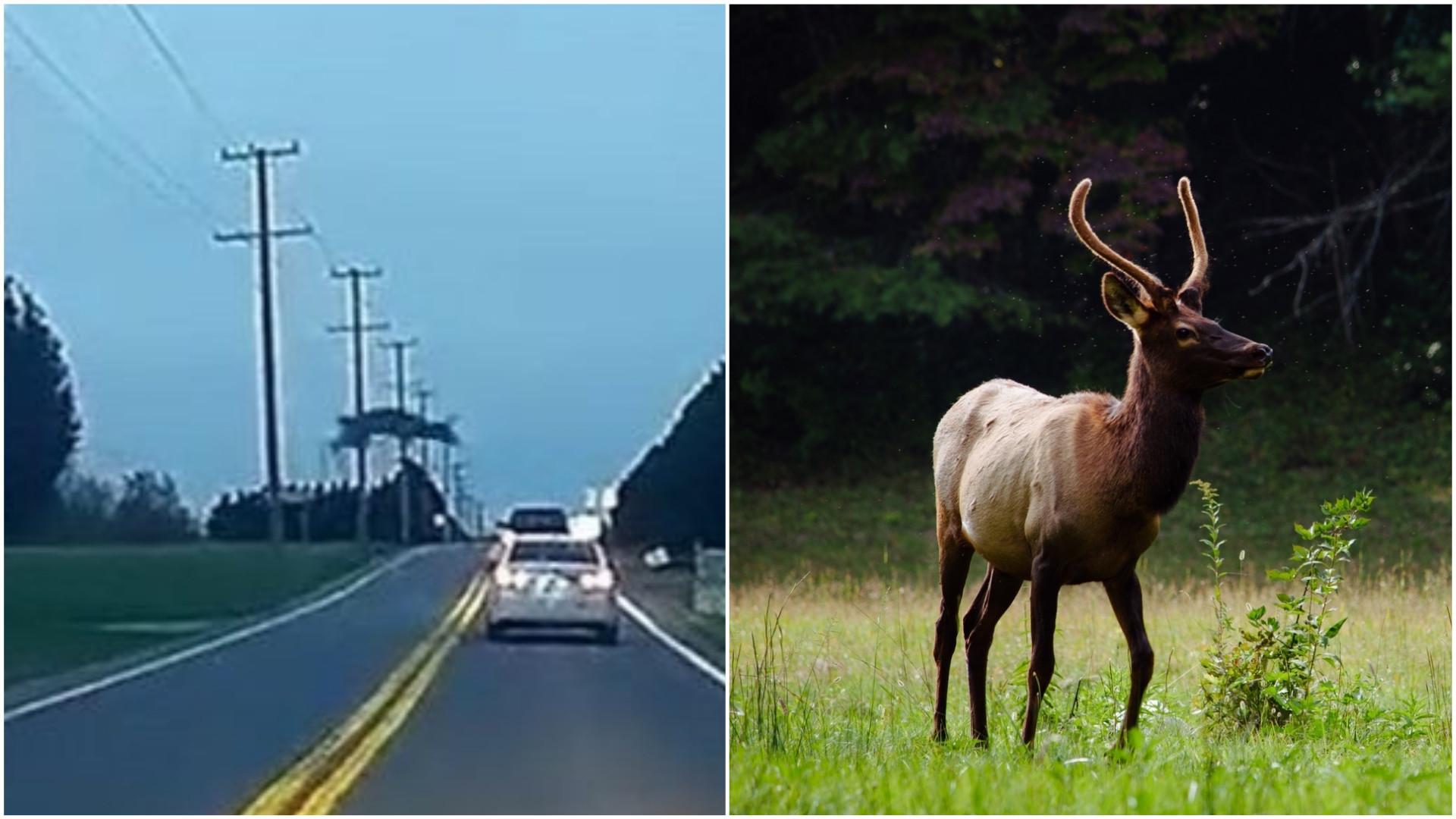 Animal tenta saltar por cima de carro em movimento nos EUA