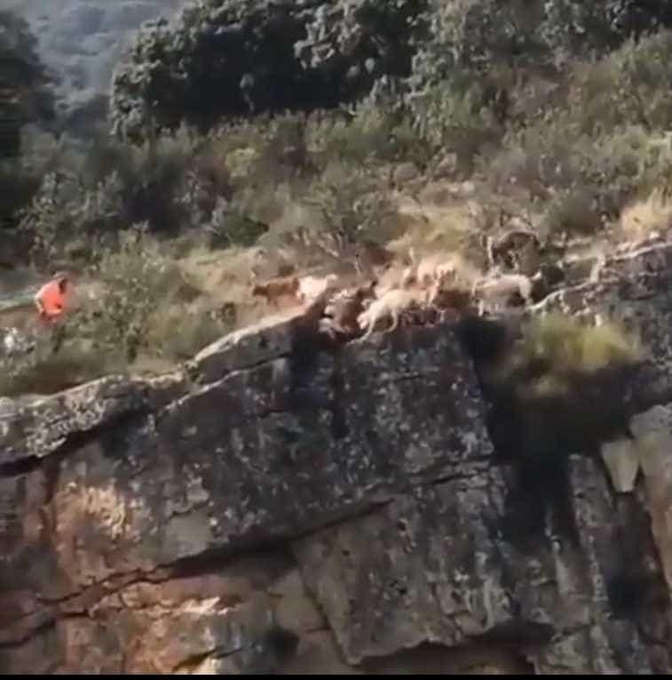 Um veado e 12 cães caem de precipício durante caça na Espanha
