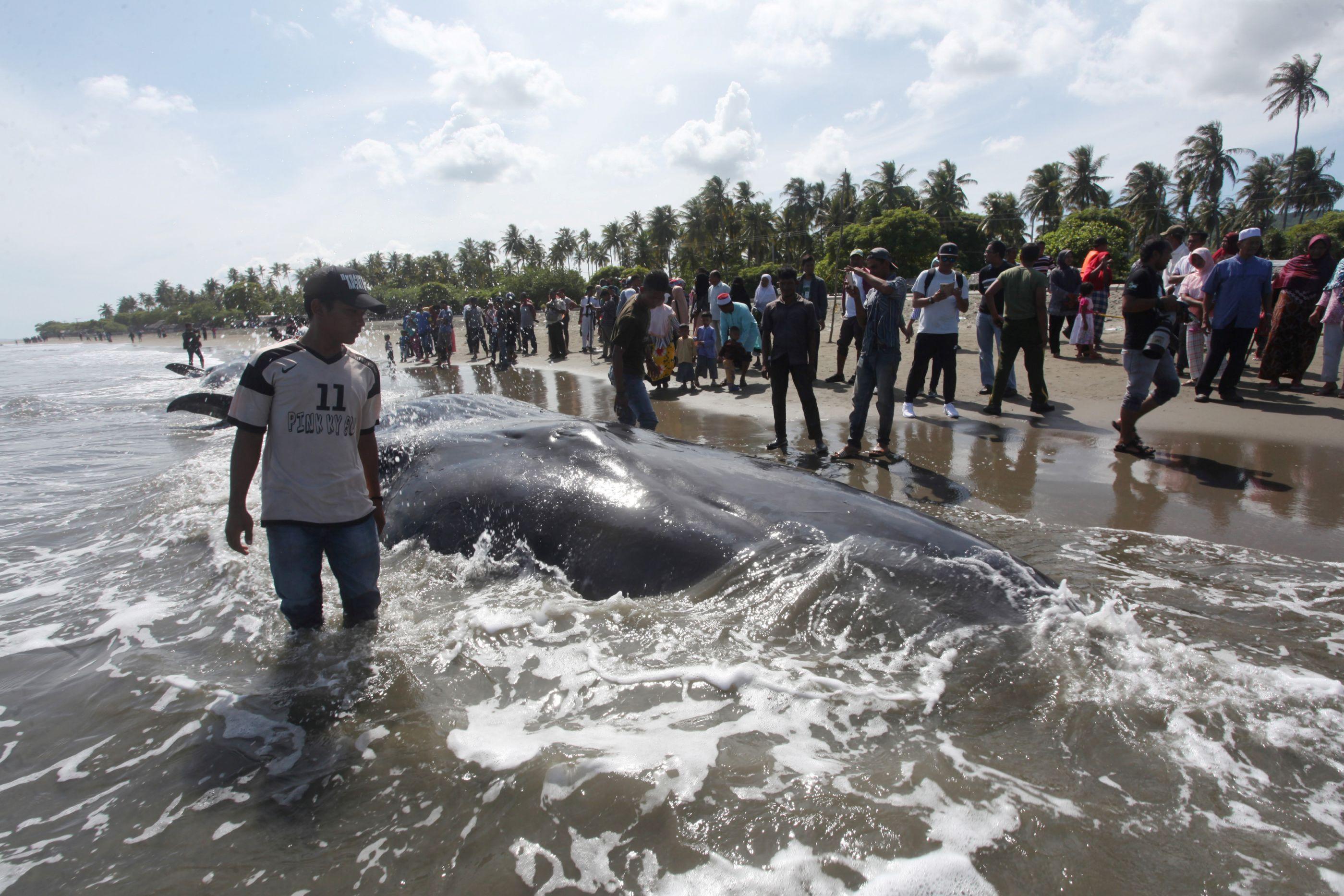 Baleia é encontrada morta com 6kg de plástico no estômago