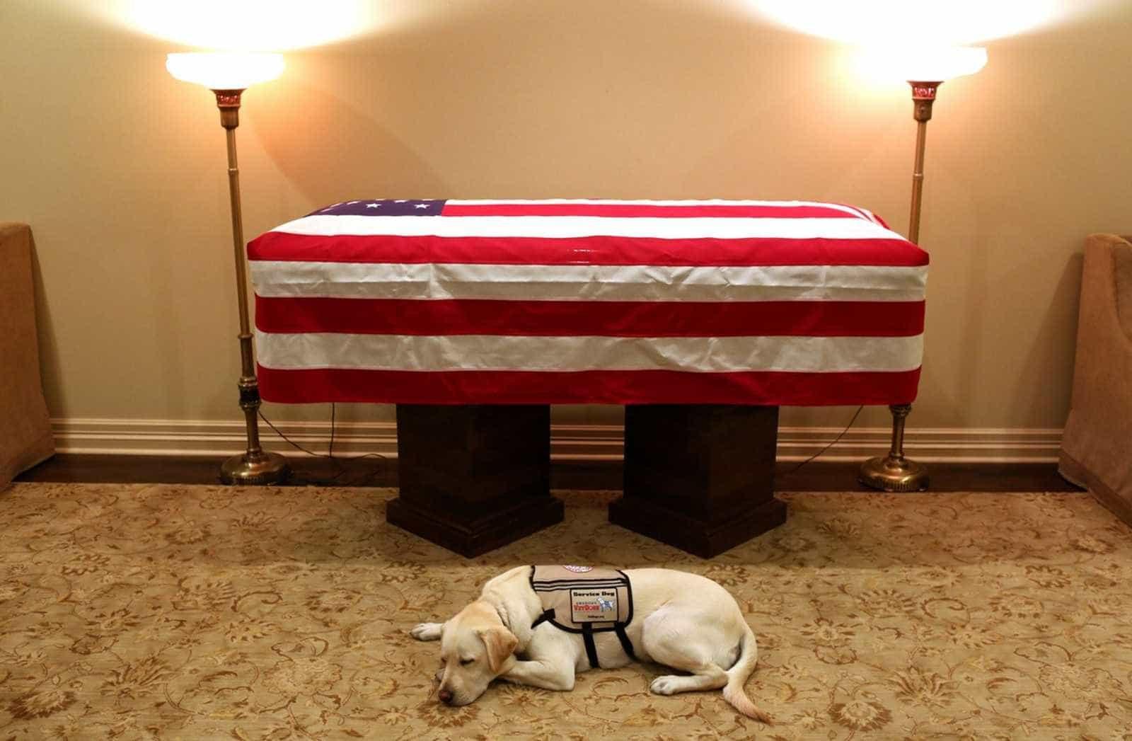 Cachorro de Bush pai é visto deitado ao lado do caixão