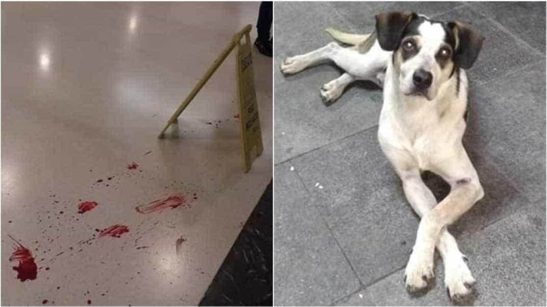 Inquérito vai apurar morte de cachorro em supermercado em Osasco