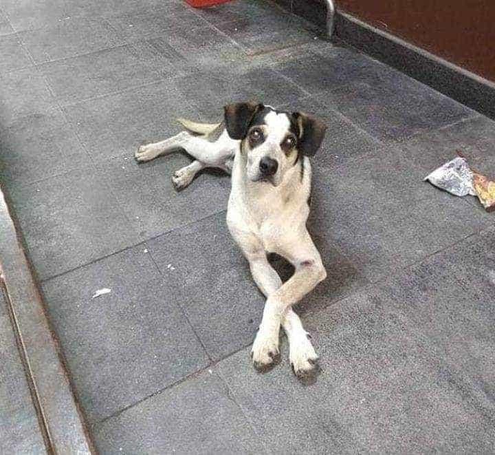 Suspeito de agredir cadela no Carrefour e veterinária são ouvidos