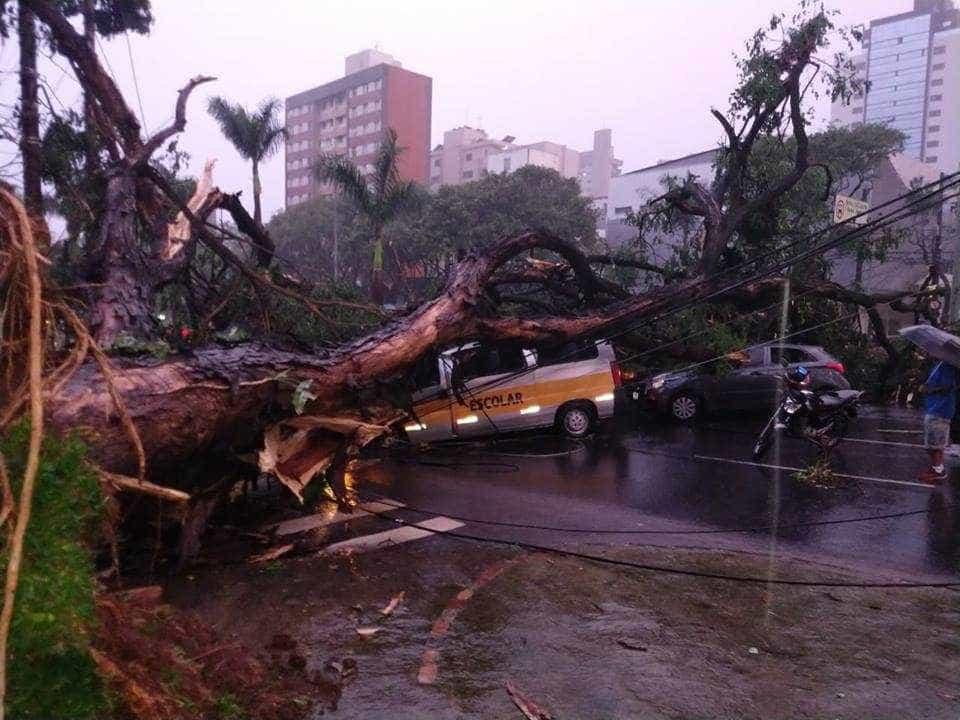 Árvore cai sobre van escolar e mata motorista; crianças não se feriram