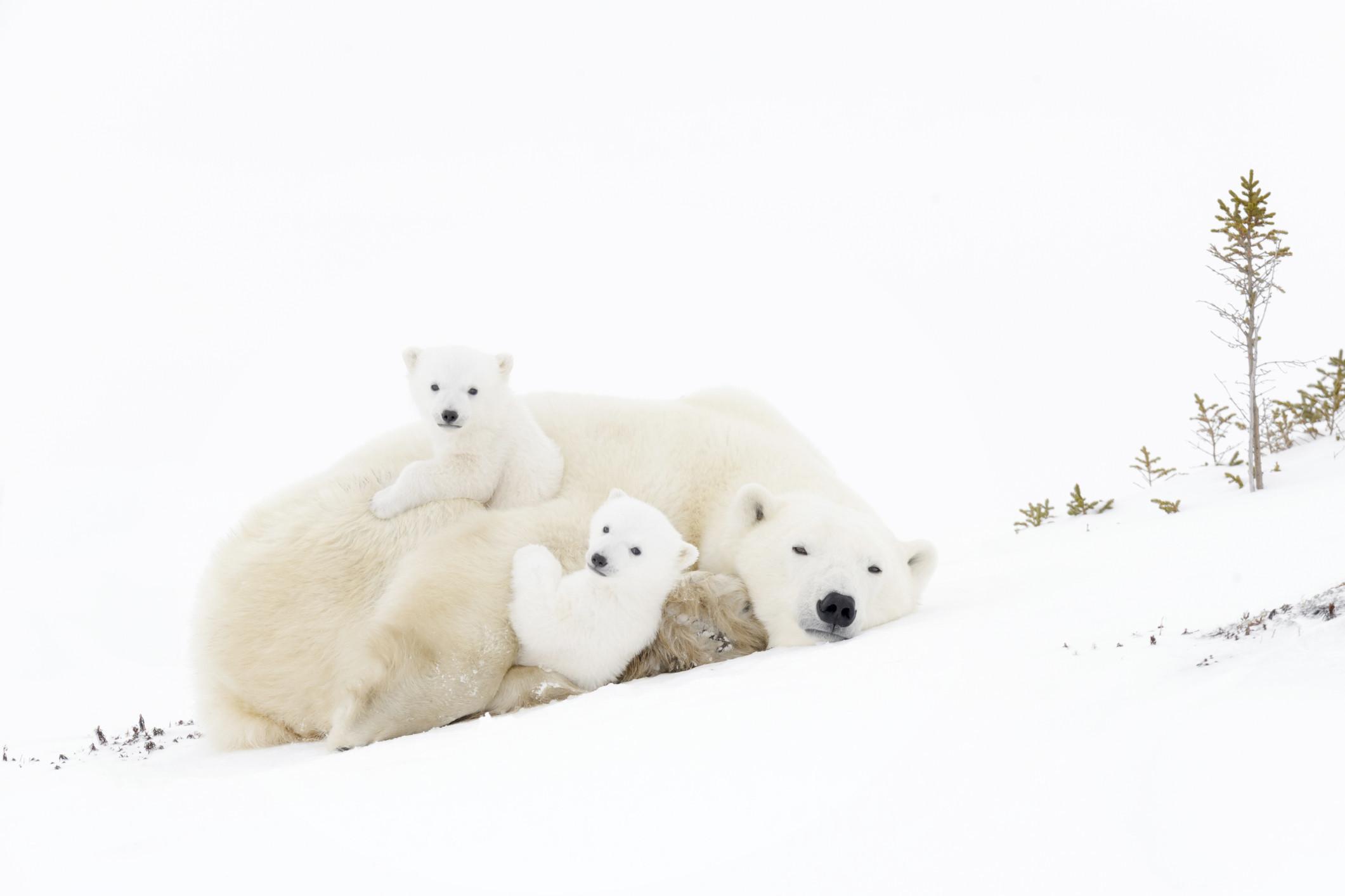 Mundo animal: veja a fofura destes filhotes com a família