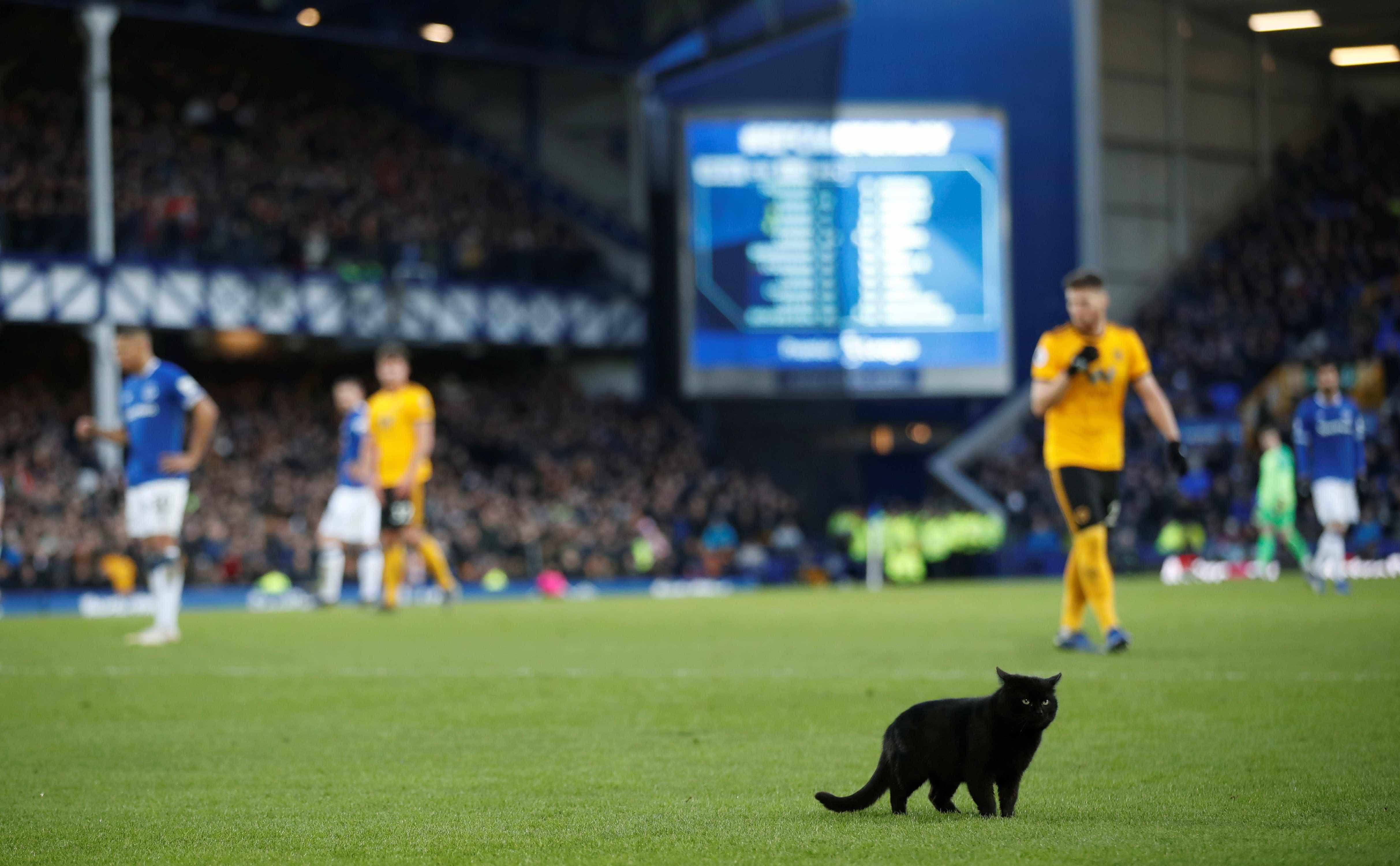 Gato invade gramado e interrompe jogo da Premier League; veja