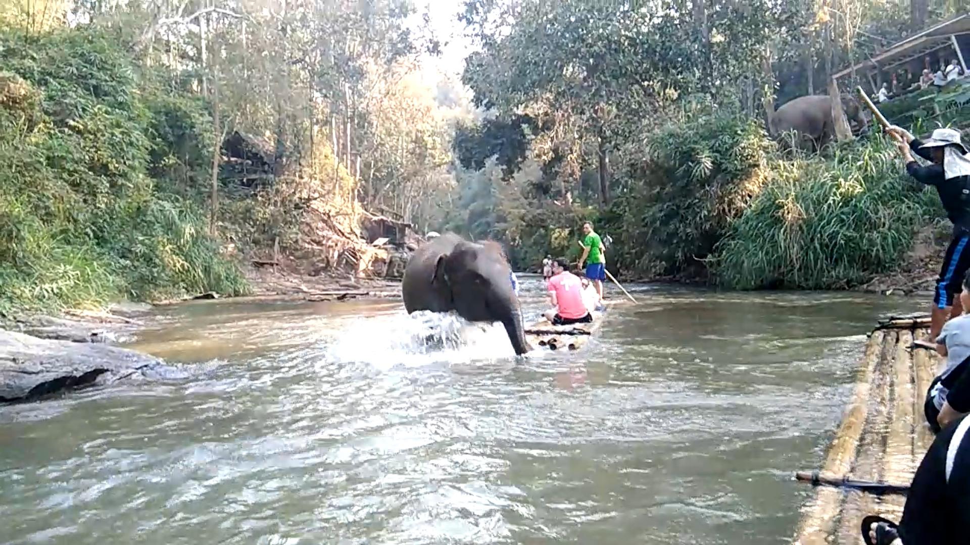 Elefante ataca barco de turistas na Tailândia; veja
