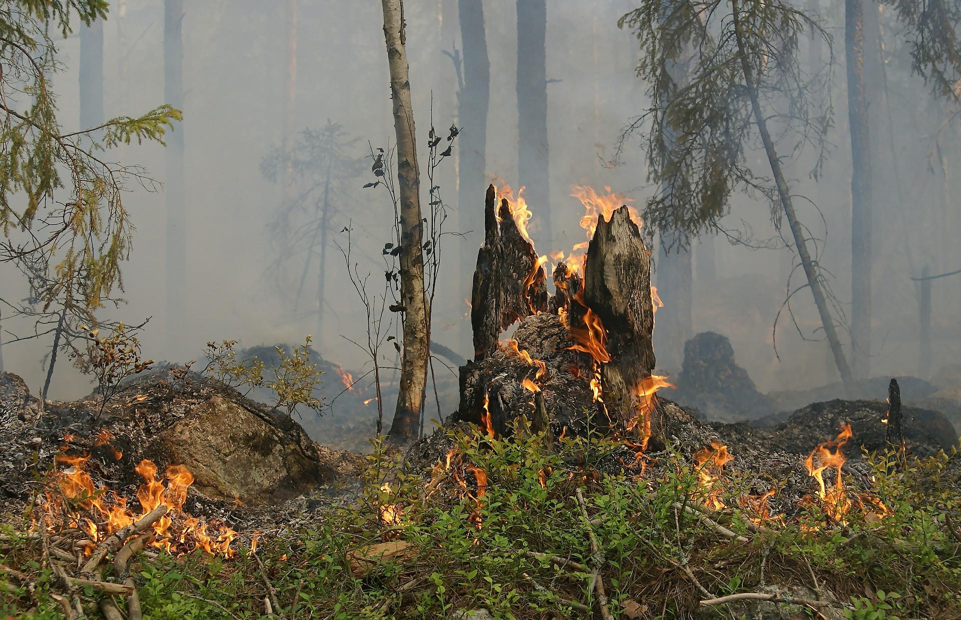 Incêndio destrói matas e ameaça aldeias pataxós na Bahia