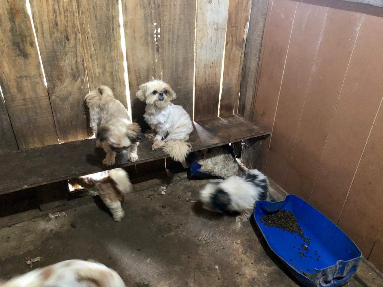 Polícia resgata mais de 40 cachorros com sinais de maus-tratos no PR