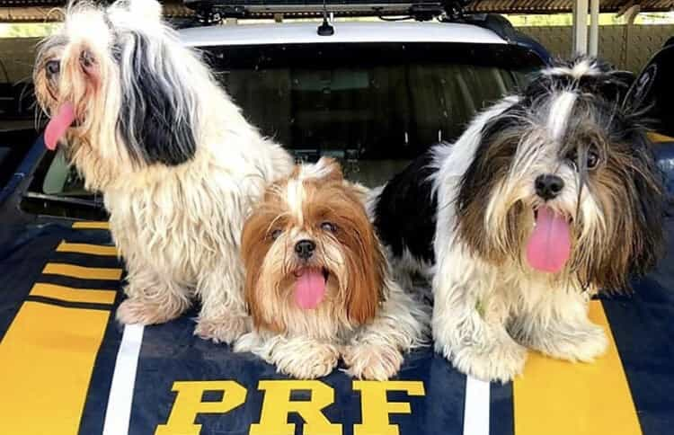Cães permanecem ao lado de motorista após acidente e são resgatados