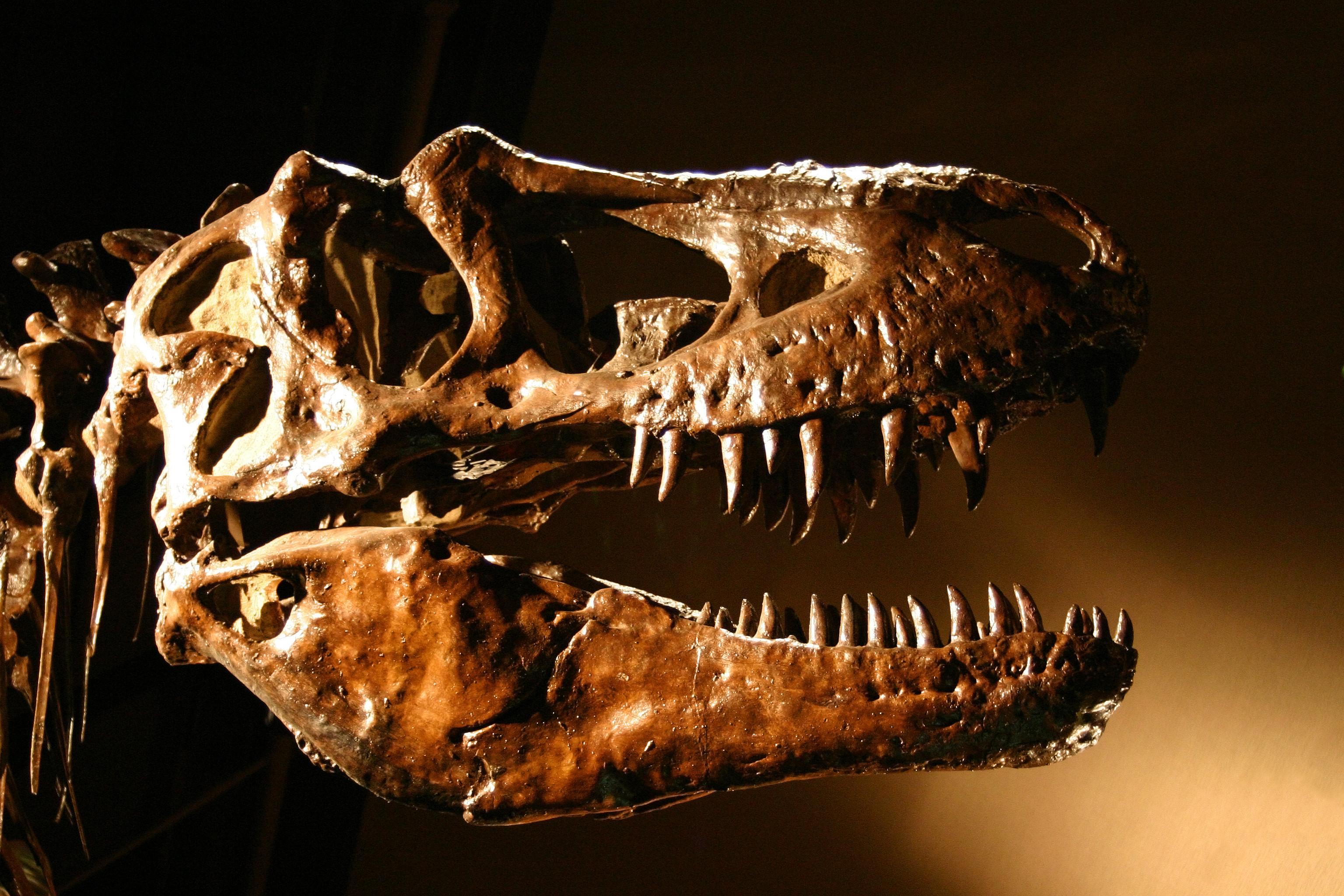 Estudo revela que dinossauro manco viveu há 85 milhões de anos em SP