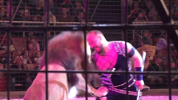 Artista de circo é atacado por leão durante espetáculo; veja